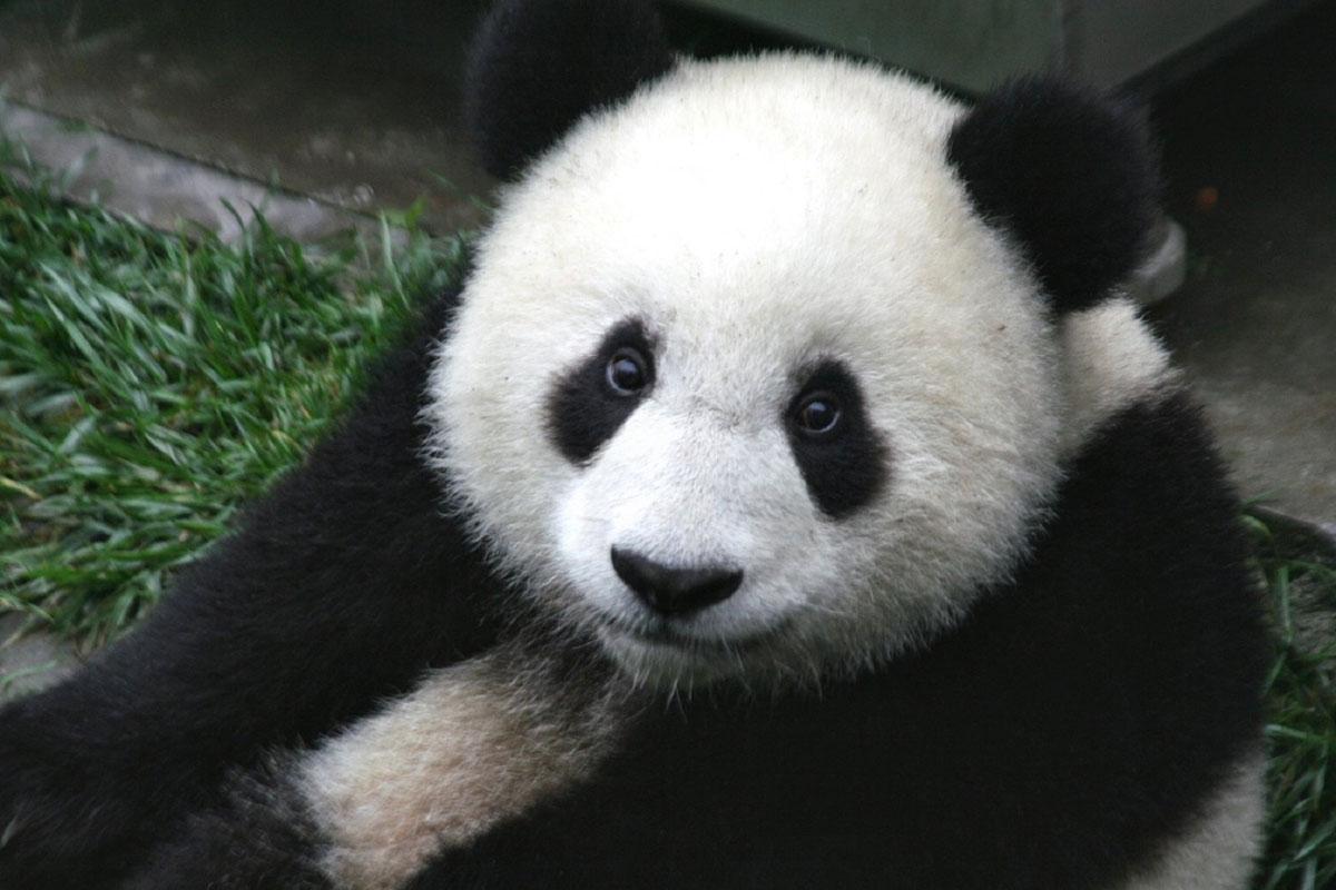 python pandas intro
